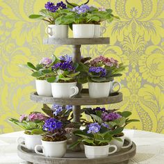 Violets stacked on a three-tier tray  #MothersDay