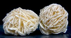 Selenite (desert) Roses    When is a rose not a rose?  When it grows in the desert...  The desert rose is an interesting phenomenon that occurs when a host mineral (in this case Selenite, a form of Gypsum) becomes trapped with sand after a desert rain.