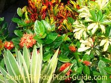 Guide to Florida Landscape Plants for the southern half of the Sunshine State