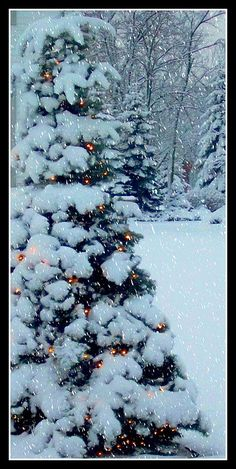 Snow covered tree with lights......