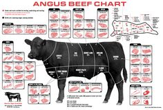 divided chart of beef cuts of meat | handy for referencing the various cuts of meat on a typical cow