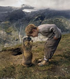 "Nose to nose: A marmot greets 8yr old Matteo in Austrian Alps.  ""They are notoriously shy around humans, beating their tails & chattering their teeth to warn us off before emitting loud whistles to tell other members of their colony to flee.  But when these alpine marmots see Matteo Walch, they scuttle to his side & show him nothing but affection.  The 8yr old built up a remarkable relationship with the creatures since first being taken to see them by his nature-loving family four years ago."""
