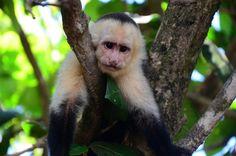 International Adventure Guide 2013: Costa Rica's Manuel Antonio National Park | Gadling.com