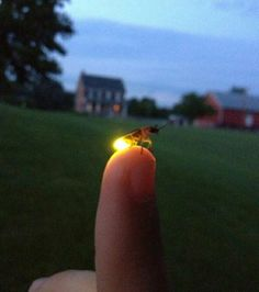 Firefly on finger #Photography #Firefly