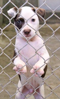 07/03/14~ODESSA~ HURRY! ~~Collie mix ~male ~less than 4 months old~ Kennel A1~ Available NOW****$35 to adopt  Located at Odessa, Texas Animal Control. 432-368-3527