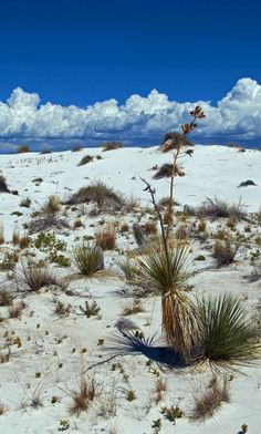 White Sands National Monument. New Mexico.
