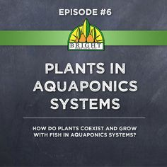 Episode 6 – Plants in Aquaponics Systems