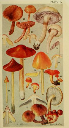 n254_w1150 by BioDivLibrary, via Flickr