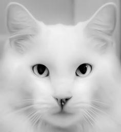 Albino Rhino Cat (Michael  Salmela, via 500px)- One of our cats. He had a little scab on his nose when I took this.