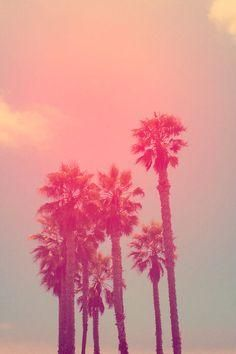 Palm Trees- Pink Summer