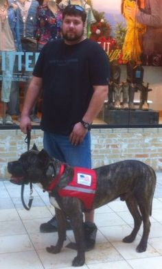 Disabled veteran asks for public support; service dog faces euthanasia for biting woman who beat him with metal pole