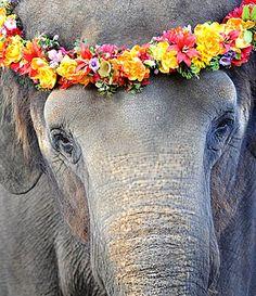 #Elephant #flower crown ToniK ❀Flowers in their coats❀