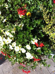 Another bouquet near Avenue Julien