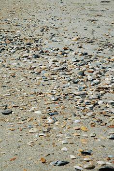 Shells all around http://www.midgettrealty.com/