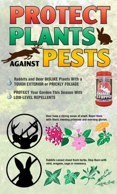 Protect your plants against pests! Read full article: http://www.menards.com/main/c-14341.htm?utm_source=pinterest&utm_medium=social&utm_content=summer_garden_care&utm_campaign=gardencenter