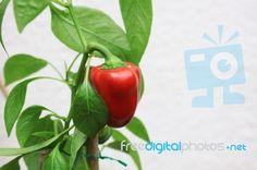 Love growing fresh peppers!