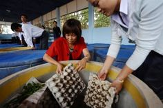 There are about 1,700 edible insect species worldwide. Last March twenty farmers from Vientiane Province received both practical and theoretical training on how to breed cricket, palm weevil, mealworm and weaver ants.
