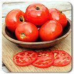 Organic Iron Lady F1 Hybrid Tomato