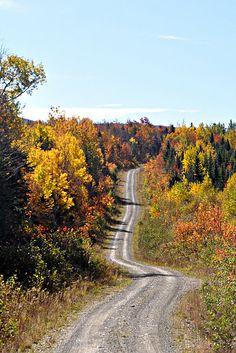 old logging road - northern Maine