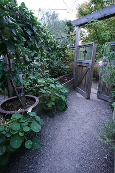 kitchen garden gate with glass