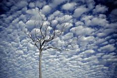 Tree and clouds. Copyright Luis Mariano González