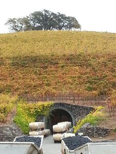 Kunde Winery caves