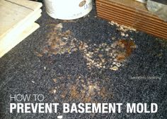 Simple Steps to Prevent Basement Mold and Mildew