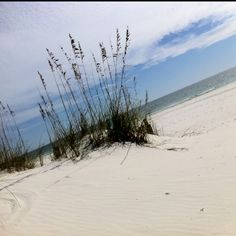 Need to be here in Gulf Shores, right now.