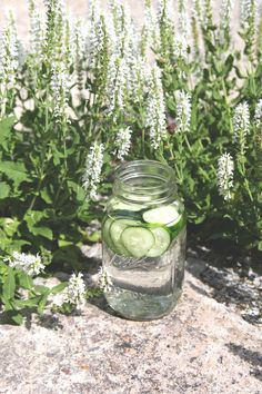 Cucumber Uses & Benefits | Free People Blog #freepeople