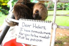 Hi haters! - Sloths Respond To Mean Tweets By Mean People