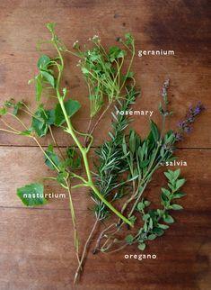 Herbs!!!