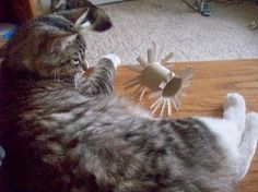 GREAT idea, and so perfect for shelter cats! diy cat toy
