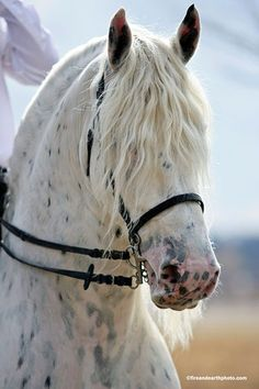 Horse / thehorselifestyle: