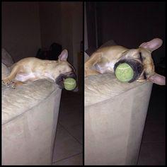 Kayla sleeps like this sometimes! We call it her binky ball
