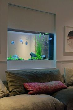 Sherlock House - In wall lightly planted freshwater aquarium