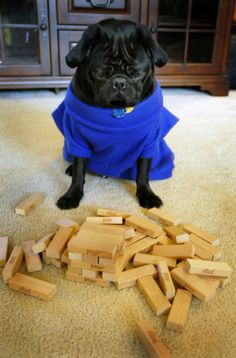 Professional Gaming:  Pug satisfaction: 7/10  Dog treat earnings: depends on success  Projected belly rubs: see above