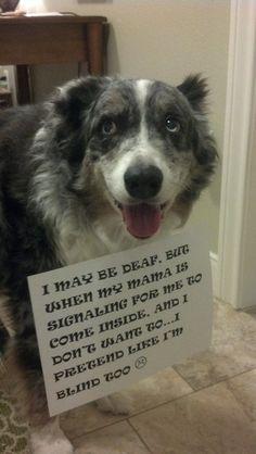 Dog Shaming. Hilarious.