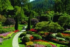 Butchart Gardens Tour: The Butchart Gardens, one of Victoria's most famous and popular attractions, are located 14 miles north of Victoria on 55 acres.  In 1904, Jennie Butchart began to beautify a worked-out quarry site left behind from her husband's pioneering efforts. Her venture has become a family commitment to horticulture and hospitality spanning over 100 years, and delighting visitors from around the world.    Kenmore Air is now selling CVS Cruise Victoria's 'Butchart Gardens Tour'.  Please reserve directly with Kenmore Air reservations between 7am and 7pm at 866.435.9524.    2011 tour prices (prices include transportation to/from the gardens, garden admission, and all taxes):    Adults (18+ yrs): $63  Youth (12-17 yrs): $43  Child (5-11 yrs): $19  Under 5 free on lap