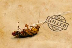 Natural Roach Remedies - How to control roaches without using harsh chemicals | Stretcher.com