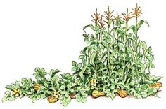Companion Planting With Vegetables and Flowers - Organic Gardening - MOTHER EARTH NEWS