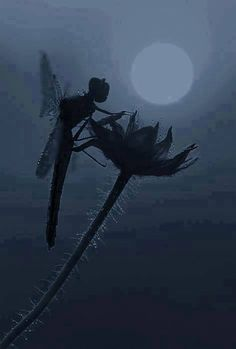 Dragonfly, looks like a fairy...