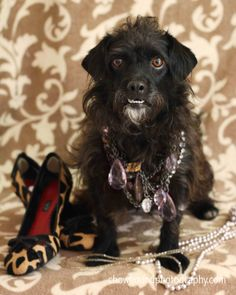 Pix We Love: Fashion Week for Dogs   Dogster > Creative way to feature dogs how need homes - beautiful!