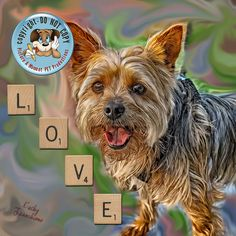 Yorkie paint copyright by Kathy Tarochione, via Flickr