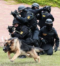 K9 Unit  And the GSD heads the attack group!