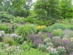 The display gardens at Northwind Perennial Farm in Burlington, WI showcase the regionally hardy perennials that we grow.