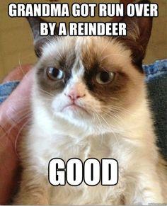 bahahaha this cat.