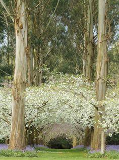 forests, secret gardens, tree, eucalyptus forest, newzealand