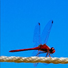 My photo of a dragonfly.  TLD