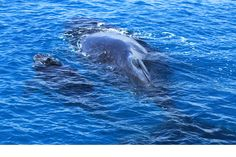 It takes two, baby. Great shot sent in by Rebecca Goodman - Humpback Whale Watching in the calm waters on the lee side of Fraser Island #HATH #fraserisland #queensland #australia #humpbackwhales #whalewatching http://www.whalewatch.com.au/ www.queensland.com/whales
