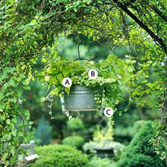Great container gardens.